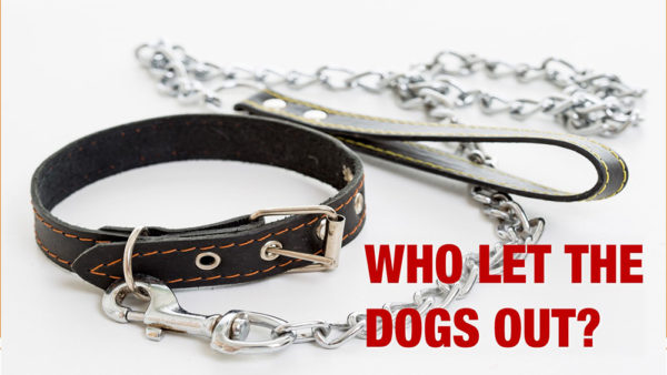 Who Let the Dogs Out Image